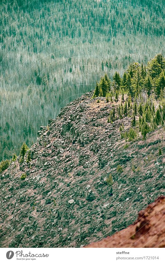 rocks and trees Baum Wald Berge u. Gebirge Ferien & Urlaub & Reisen wandern Bergsteigen Oregon USA Pinie Felsen Gemälde Farbfoto Außenaufnahme Menschenleer