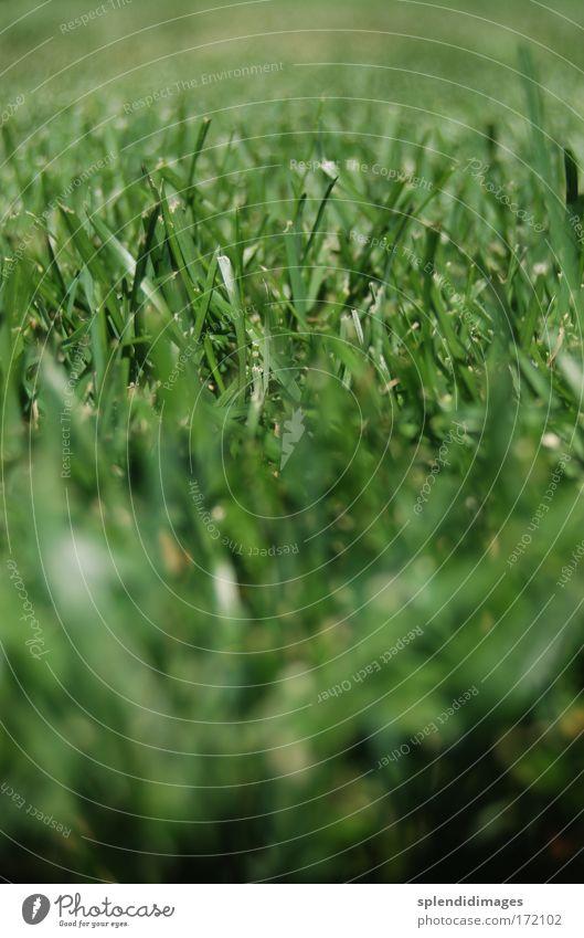 green lawn Natur schön grün Pflanze Sommer Wiese Gras Frühling Park Feld Erde frisch Rasen Sportrasen Duft Farbe
