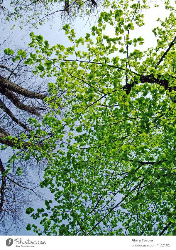 [Harusaki|DD] frisches Grün Himmel Natur blau grün weiß Baum Sonne Blatt schwarz Umwelt Park hell braun frei Schönes Wetter