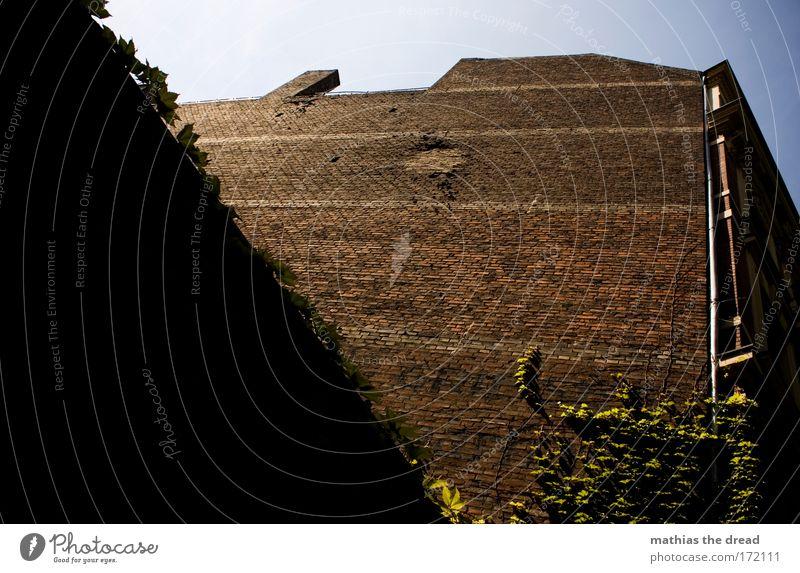 BACKSTEIN Natur Stadt Pflanze schön Sommer Blatt Haus Fenster Umwelt Wand Architektur Gebäude Mauer Deutschland Fassade Wachstum