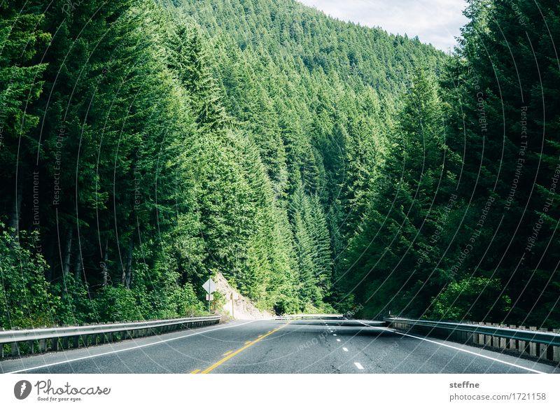 grüne Wand Natur Landschaft Sommer Schönes Wetter Baum Wald Fichtenwald USA Oregon Straße Ausflug wandern Farbfoto Außenaufnahme Textfreiraum unten