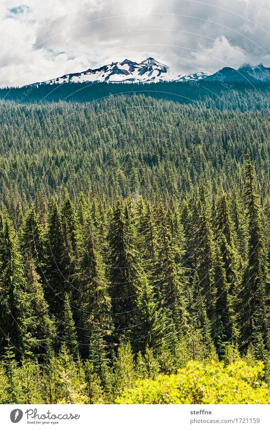 Diamond Peak Landschaft Wolken Sommer Baum Berge u. Gebirge Gipfel Schneebedeckte Gipfel Tourismus Ferien & Urlaub & Reisen wandern Fichte Fichtenwald Wald