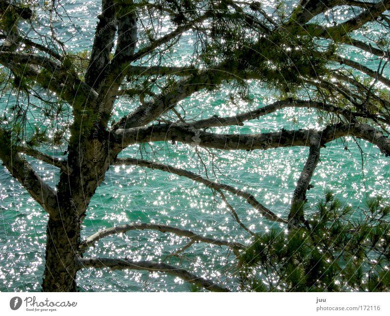 es ist nicht alles gold, was glänzt Natur Wasser grün blau Baum Sommer glänzend Insel Europa leuchten Bucht Spanien Schönes Wetter Mallorca Stadtrand