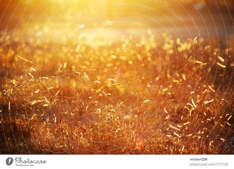 Golden Times. Natur schön Pflanze ruhig Erholung Wiese Gras Wärme Erde Stimmung Beleuchtung Gold Zukunft Filmmaterial Spaziergang Reisefotografie