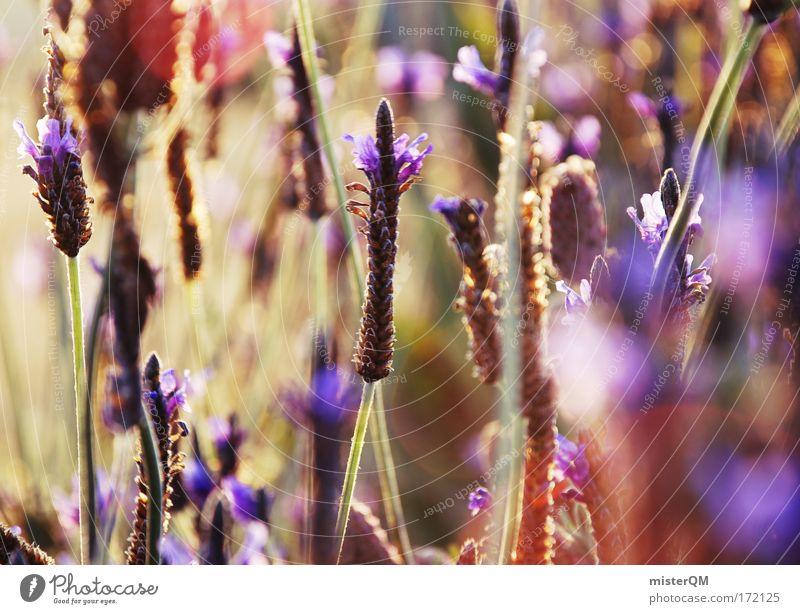 Infinity. Natur grün Pflanze Sommer Blume ruhig Erholung Wiese Gefühle Landschaft Blüte Gras Stimmung Farbstoff Kunst Feld