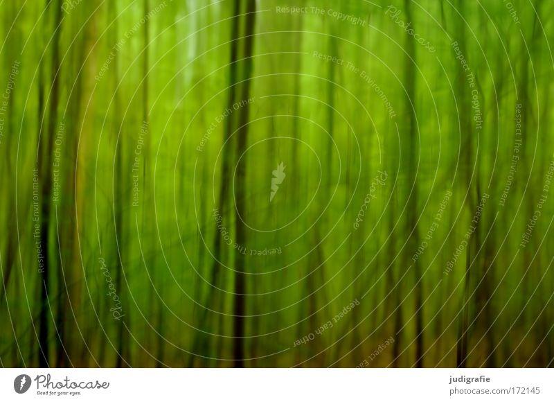 Wald Natur Baum grün Pflanze Sommer Tier Wald träumen Landschaft Angst Umwelt abstrakt Unschärfe