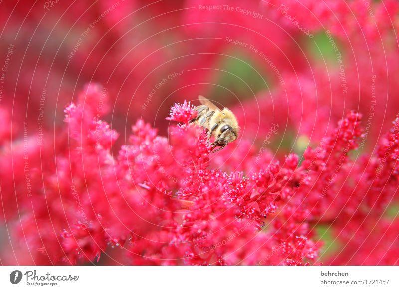 farbe für graue tage Natur Pflanze Tier Sommer Schönes Wetter Blume Blatt Blüte Garten Park Wiese Wildtier Biene Tiergesicht Flügel 1 Blühend Duft fliegen