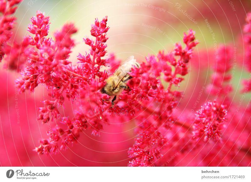 überwacht | verstecken bringt nix Natur Pflanze Tier Sommer Schönes Wetter Blume Blatt Blüte Garten Park Wiese Biene Flügel 1 Blühend Duft fliegen Fressen schön