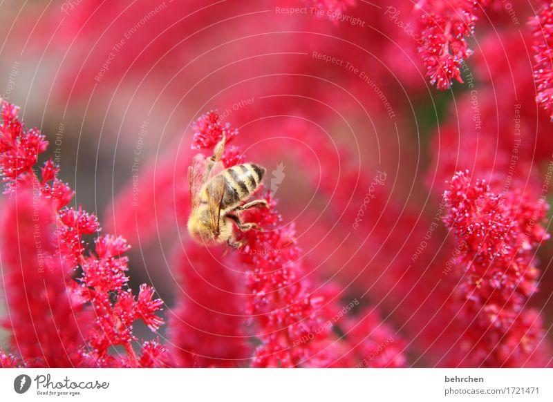 lady in red Natur Pflanze Sommer schön Blume rot Tier Blüte Wiese klein Beine Garten fliegen Park Wildtier Flügel