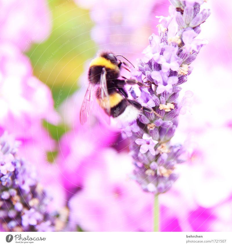 its summertime! Natur Pflanze Sommer schön Blume Blatt Tier Blüte Wiese klein Garten fliegen rosa Park Wildtier Flügel