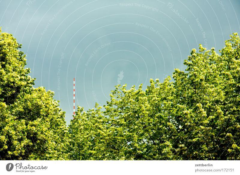 Linden Himmel Baum Sommer Wolken Straße Gewitter Hauptstadt Allee Berliner Fernsehturm Antenne Fernsehturm Alexanderplatz Laubbaum Linde Regierungssitz Hauptstraße
