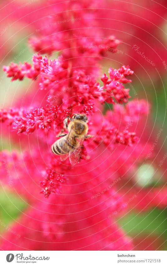 arbeit und struktur Natur Pflanze Sommer schön Blume rot Blatt Tier Blüte Wiese Garten fliegen Park Wildtier Flügel Blühend