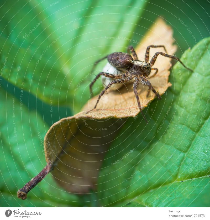 Auf Beutejagt Pflanze Tier Frühling Sommer Baum Gras Sträucher Moos Farn Blatt Blüte Wildpflanze Garten Park Wald Wildtier Spinne Tiergesicht 1 Fressen