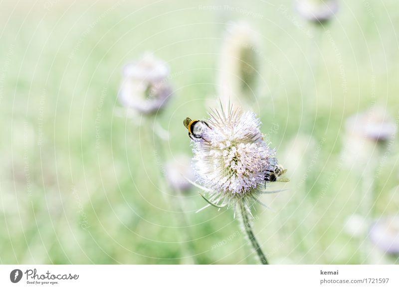 Schwäbische Landpartie | Hummelhinternstreicheln Natur Pflanze Sommer schön Blume Tier ruhig Umwelt Wärme Leben Blüte Wiese Zusammensein Zufriedenheit Wildtier sitzen