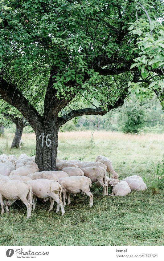 Schwäbische Landpartie | Baum Nummer 16 Natur Pflanze Sommer grün Landschaft Erholung Tier Umwelt Wiese lustig Zusammensein liegen authentisch stehen Schutz