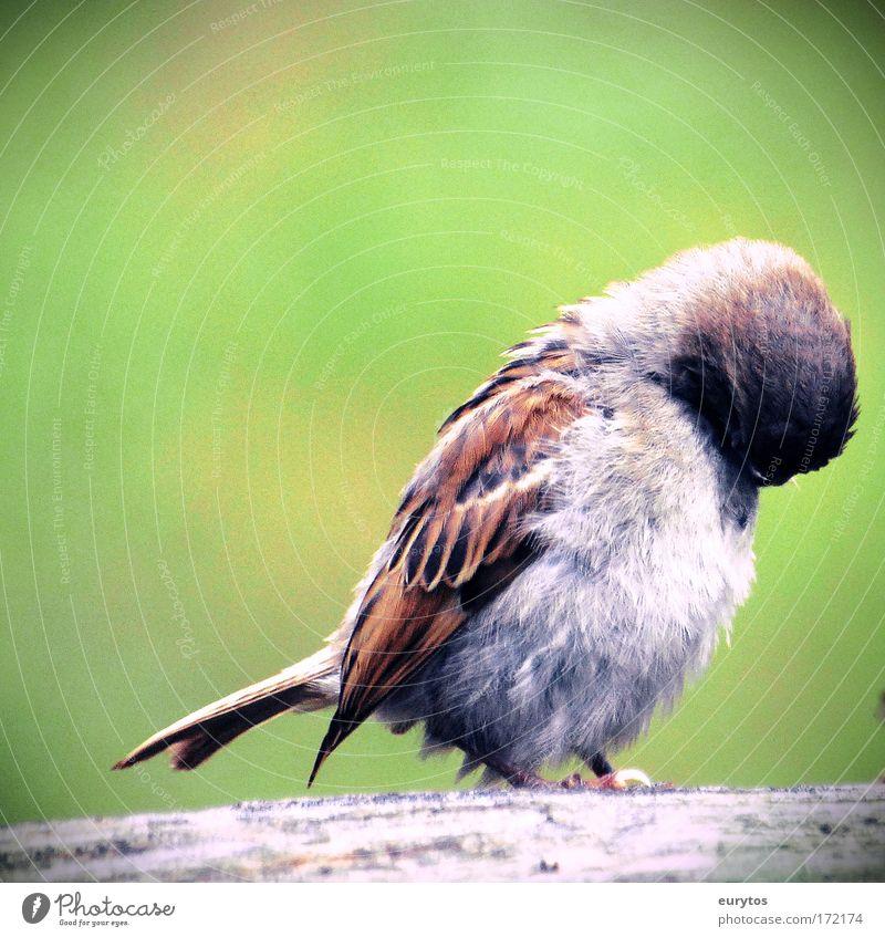 Spatz! Tier Vogel dreckig frei Reinigen einzigartig frech Spatz