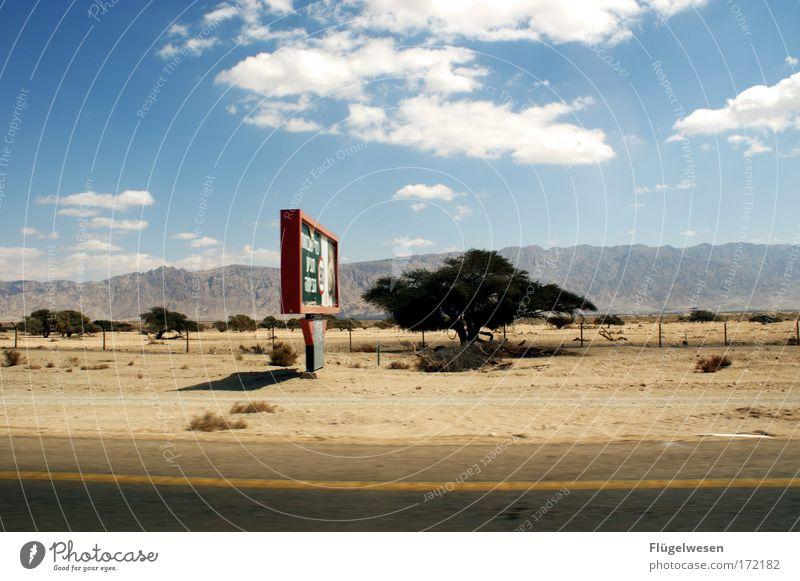 Free like a lion! Himmel Sonne Sommer Einsamkeit Ferne Straße Freiheit Freizeit & Hobby Zusammensein Felsen Schilder & Markierungen Ausflug Lifestyle einzigartig beobachten Wüste