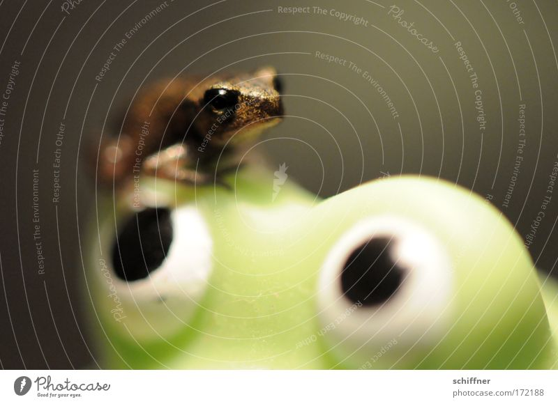 Maaama! Natur grün Auge klein Umwelt sitzen beobachten festhalten Frosch Geborgenheit hocken winzig Kröte Molch