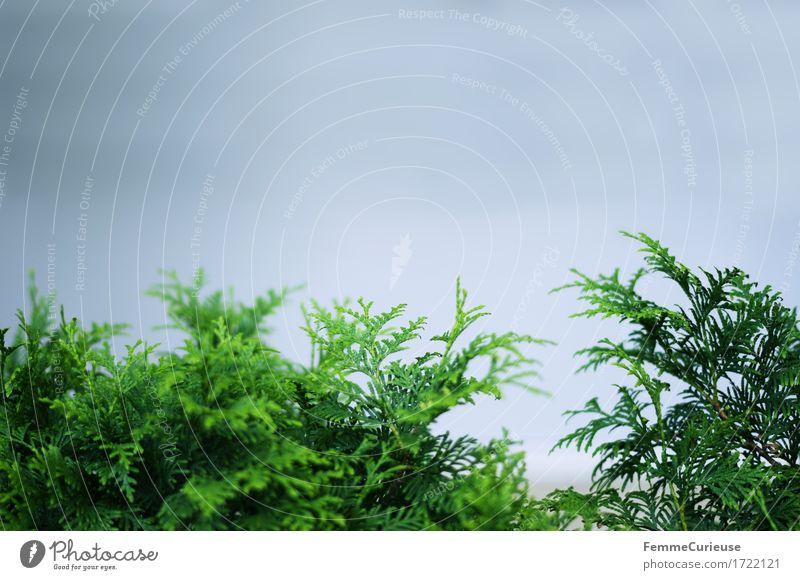 Grün. Umwelt Natur Landschaft Pflanze Sträucher Grünpflanze Wildpflanze Garten Park Kontrast saftig grün Grünfläche bläulich Graunton grau Naturschutzgebiet