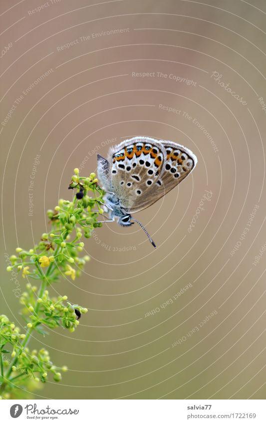 Mach mal Pause Natur Pflanze Sommer schön grün Blume Tier ruhig gelb Blüte Glück braun oben ästhetisch Idylle Blühend
