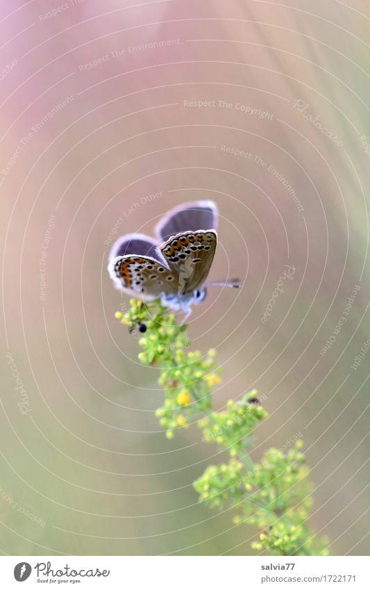Leichtigkeit Natur Pflanze Sommer Tier Umwelt Leben Blüte natürlich Glück klein Wildtier Idylle ästhetisch genießen Flügel Blühend