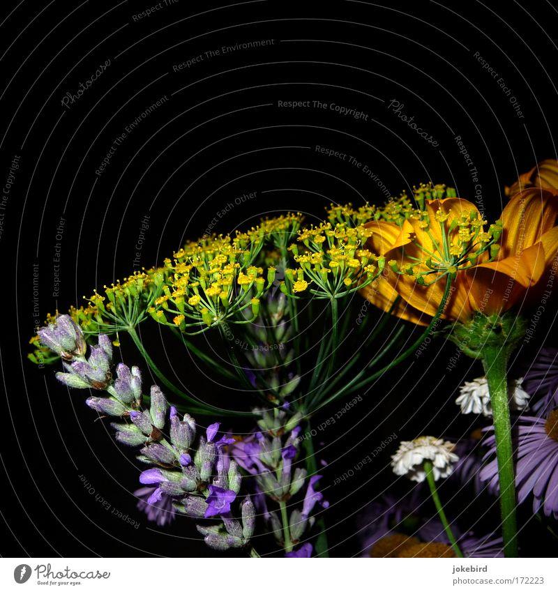 Provence meets Kleingarten schön Farbe Sommer Blume schwarz gelb Blüte natürlich Blühend einfach violett zart rein Blumenstrauß Stengel Duft