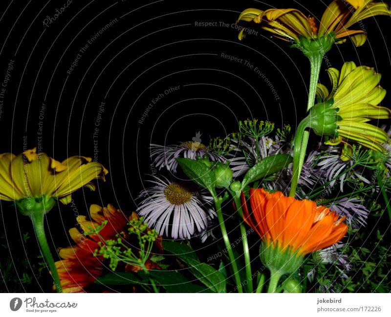 Als ich am frühen Morgen dir diese Blumen brach. Farbfoto Menschenleer Textfreiraum oben Abend Blitzlichtaufnahme Sommer Blüte Stengel Sonnenhut Gazanie Astern
