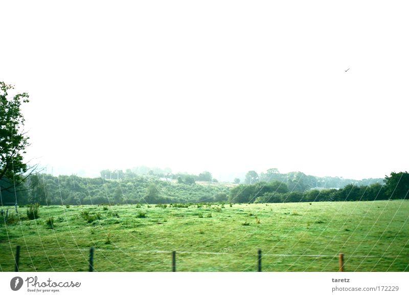 Alles zieht so schnell vorbei Natur weiß grün Ferne Einsamkeit Tier Wiese Landschaft Bewegung Stimmung Vogel Feld Geschwindigkeit Hügel Wildtier saftig