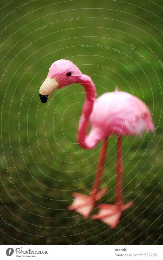 Penelope Natur Landschaft Garten Park Wiese Tier 1 Stimmung rosa grün Flamingo Haustier Dekoration & Verzierung lustig tierisch falsch Metallfeder Schnabel
