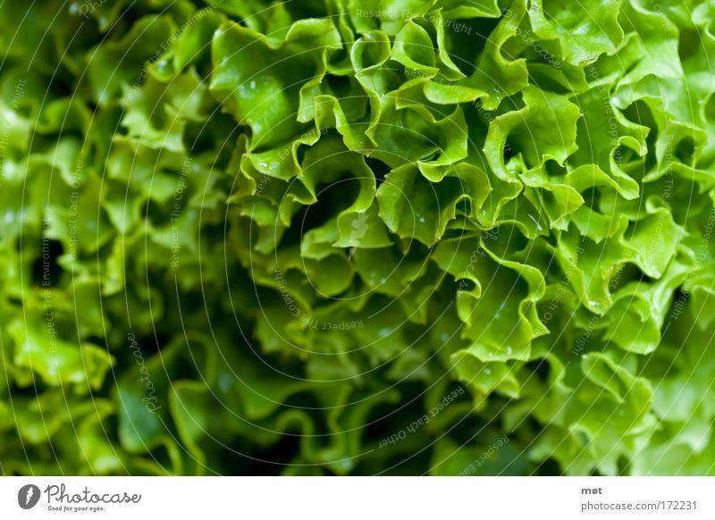 schön gesund grün Lebensmittel Ernährung Gemüse Bioprodukte Nahaufnahme Salat Salatbeilage Vegetarische Ernährung