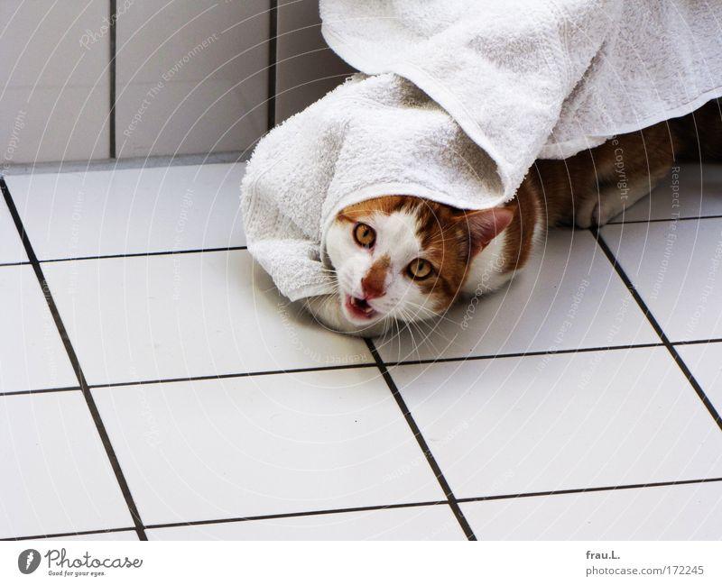 Schlossgespenst Katze schön Freude Tier Leben Spielen Fröhlichkeit niedlich Wellness Neugier Fliesen u. Kacheln Lebensfreude genießen kämpfen Haustier Handtuch