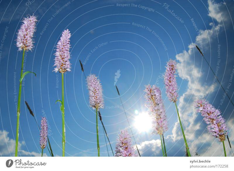 what a beautyful day Natur Himmel weiß Sonne grün blau Pflanze Sommer Wolken Wiese Blüte Gras Wärme rosa Umwelt Wachstum