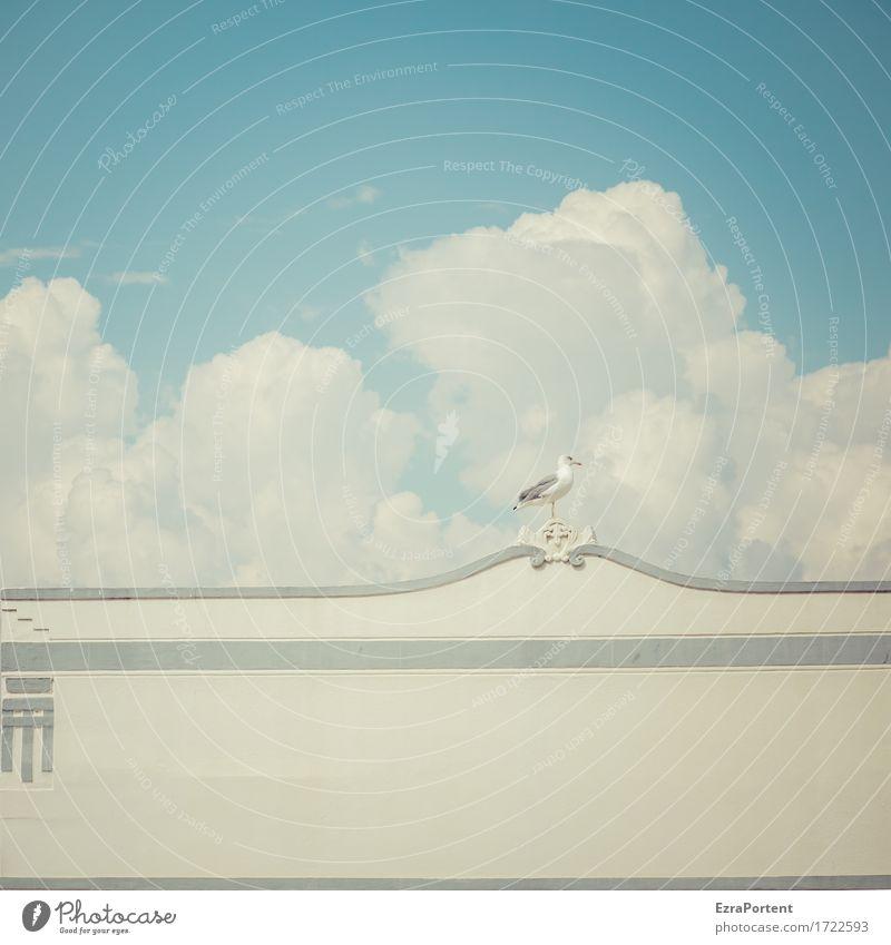 gaivota Himmel blau Sommer weiß Wolken Tier Haus ruhig Architektur Wand Gebäude Mauer grau Vogel Linie Fassade