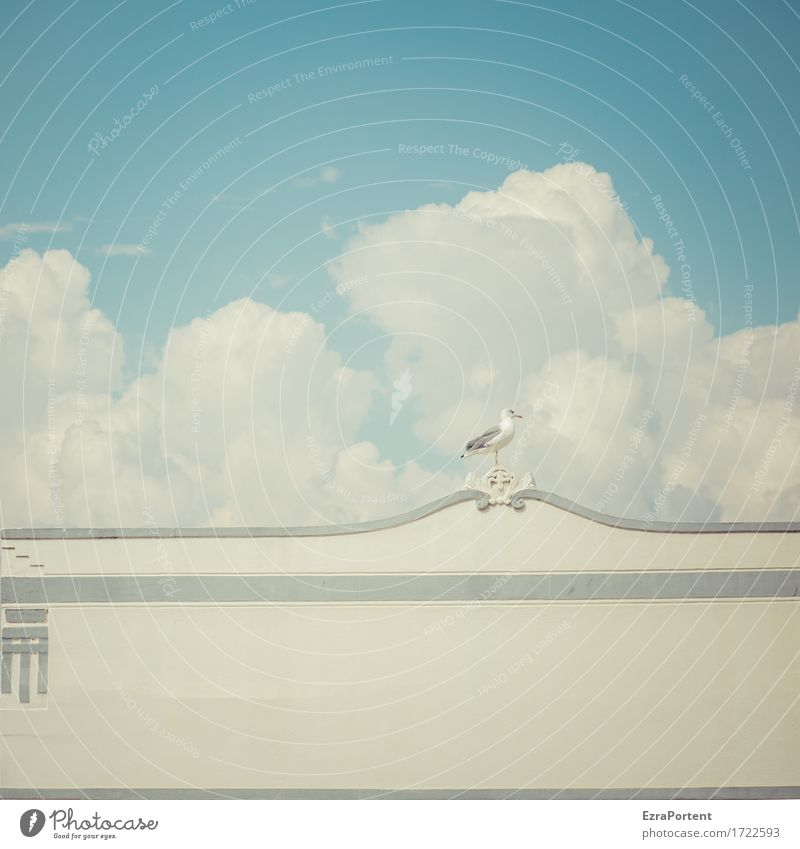 gaivota Luft Himmel Wolken Sommer Schönes Wetter Altstadt Haus Bauwerk Gebäude Architektur Mauer Wand Fassade Tier Vogel 1 Dekoration & Verzierung Ornament