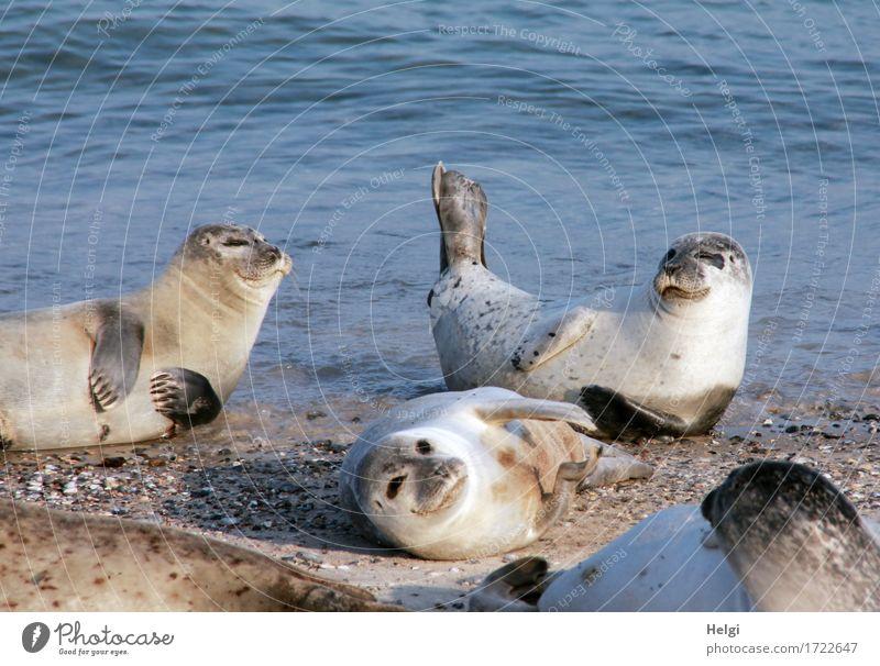 Sonnenbad... Natur blau Sommer Wasser Meer Erholung ruhig Tier Strand Umwelt natürlich Küste außergewöhnlich grau braun Zusammensein