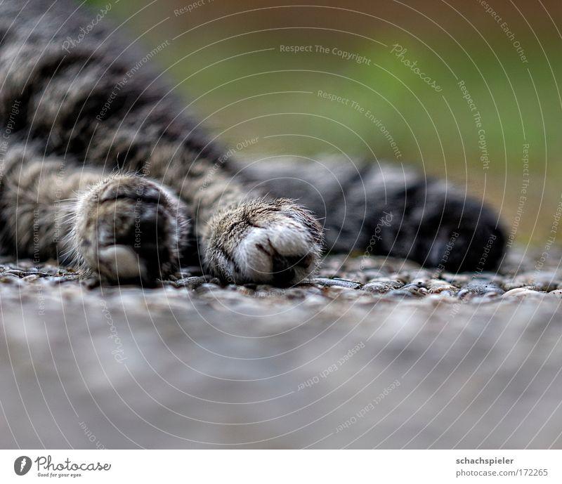 pfoto Farbfoto Außenaufnahme Textfreiraum unten Abend Schwache Tiefenschärfe Tier Haustier Katze Europäisch Kurzhaar 1 Erholung liegen schlafen Geborgenheit