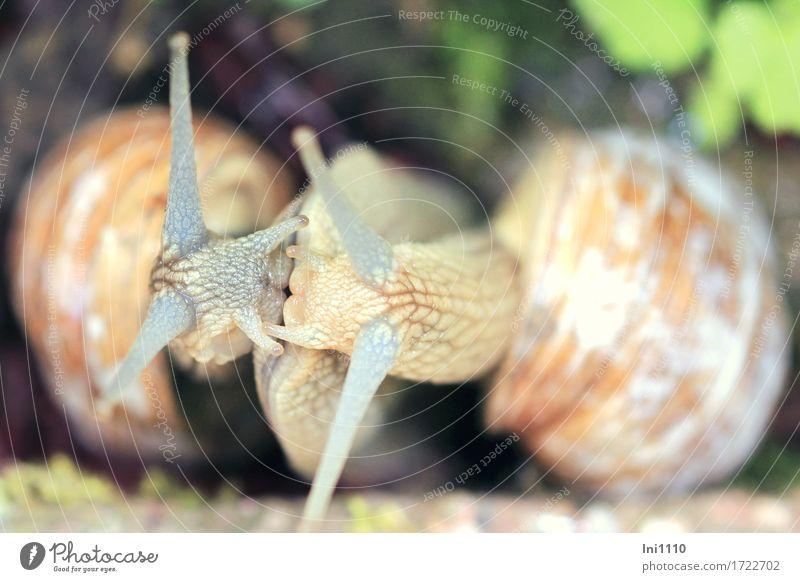 Schneckenkuss Natur Sommer grün weiß Tier schwarz Auge Wiese natürlich Garten grau braun Zusammensein rosa Park Tierpaar