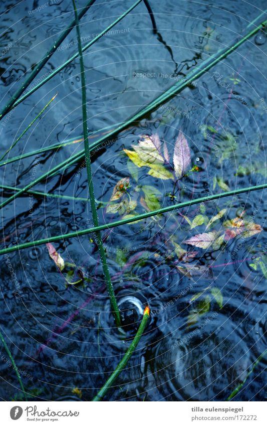 fall Natur Wasser blau Regen Umwelt Wassertropfen nass Seeufer