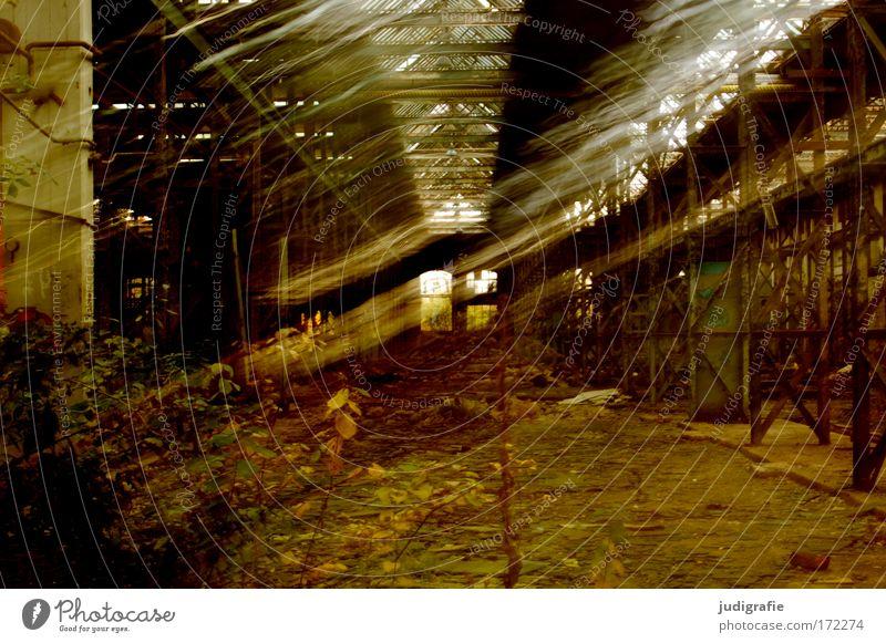 Industrieromantik alt Pflanze Haus dunkel Architektur Traurigkeit Gebäude Angst dreckig Perspektive kaputt bedrohlich Lager Fabrik Vergänglichkeit