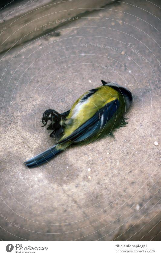 :( Farbfoto Totes Tier Vogel 1 Traurigkeit trist Tod Schmerz Erschöpfung Trauer Vergänglichkeit Meisen Ende