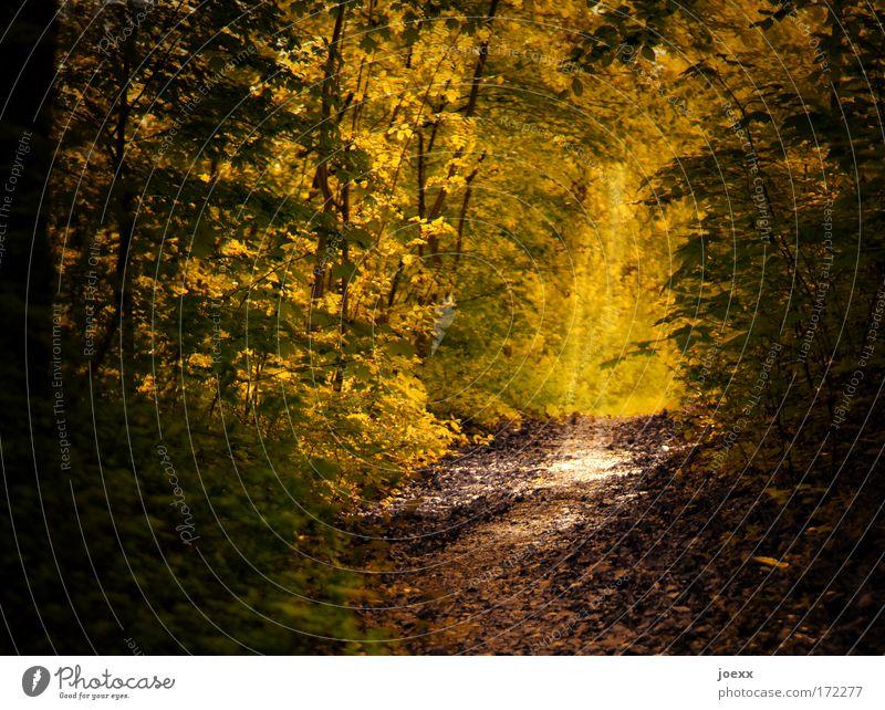 Weg ins Licht Natur alt grün Baum ruhig Wald gelb Leben Wege & Pfade Tod braun hell Angst Erde Kraft Hoffnung