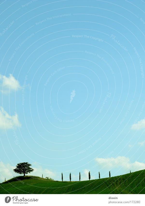 cartolina illustrata Natur Himmel Baum Pflanze Sommer Ferien & Urlaub & Reisen ruhig Wolken Ferne Erholung Wiese Gras Wärme Landschaft hell Feld