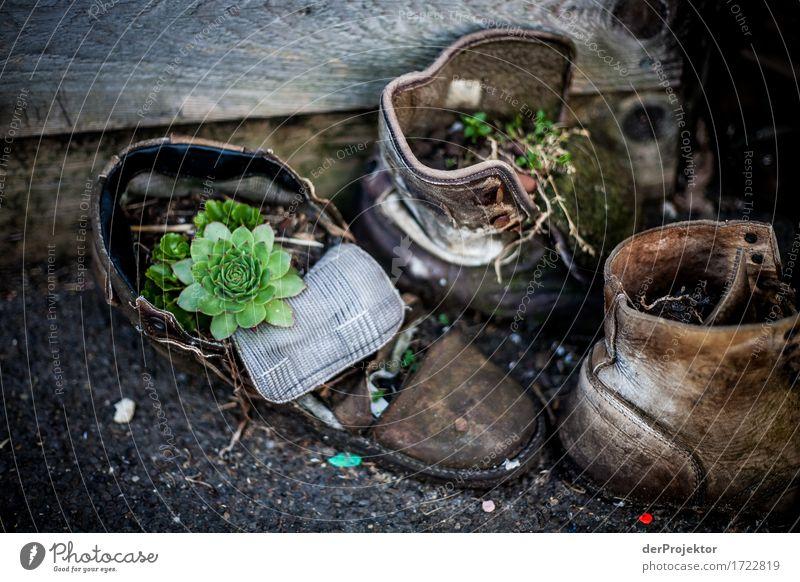 Schuhe nicht zu lange draussen stehen lassen Natur Ferien & Urlaub & Reisen Stadt alt Pflanze Sommer Umwelt Leben Gefühle Lifestyle Berlin außergewöhnlich Mode
