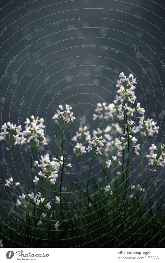 am ufer. Farbfoto Natur Pflanze Tier Blume Grünpflanze Seeufer Blühend dunkel Wiesen-Schaumkraut