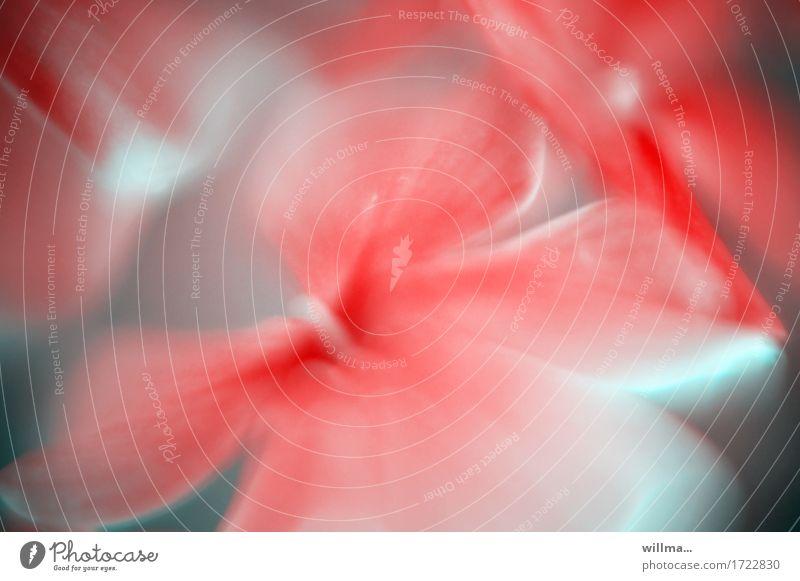 blumig Pflanze Blume Blüte Blütenstempel rot sanft harmonisch duftig Aquarell weich verträumt Farbfoto Außenaufnahme Unschärfe