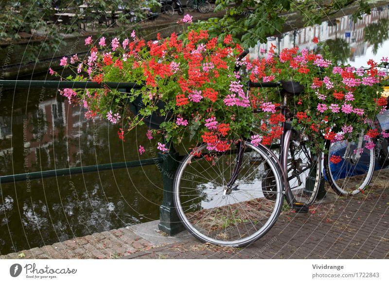 Natur Ferien & Urlaub & Reisen Sommer Baum Blume Landschaft Architektur Blüte Frühling Sport See Tourismus Wasserfahrzeug Park Verkehr Fahrrad