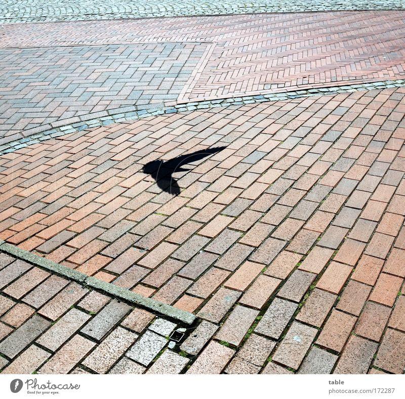 Ausflug Natur Stadt rot Freude Ferien & Urlaub & Reisen ruhig schwarz Einsamkeit Tier Gefühle grau Stein Vogel fliegen Beton Baustelle
