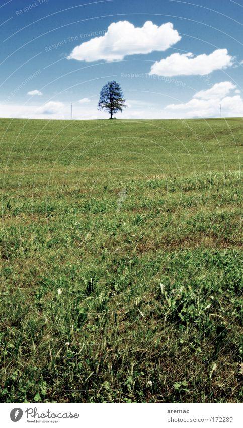 Einzelkind Natur Himmel Baum Pflanze ruhig Wolken Wiese Gras Landschaft Feld Umwelt leer Schönes Wetter