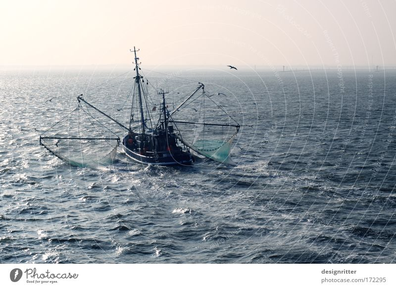 Auf der Suche nach Mr. Krabs Ferien & Urlaub & Reisen Sommer Meer ruhig Ferne Freiheit Schwimmen & Baden Wellen groß frei Tourismus Ausflug Ernährung Fisch