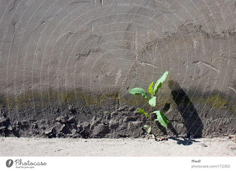 [PC-Usertreff Ffm]: Einzelgänger Pflanze Einsamkeit Leben Wand Umwelt Freiheit Mauer Kraft Fassade Beginn Erfolg Wachstum Perspektive Hoffnung trist einzigartig